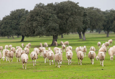 Don't Follow the Herd When Working on End of Year Federal Business